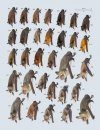 Handbook of the Mammals of the World, Volume 9: Bats