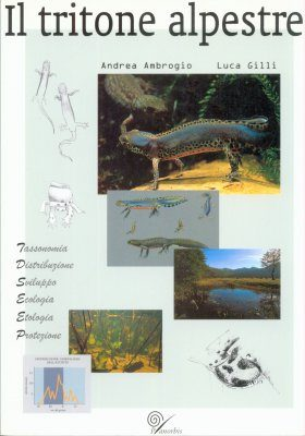 Il Tritone Alpestre [The Alpine Newt]