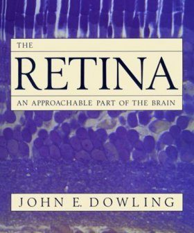 Retina: An Approachable Part of the Brain