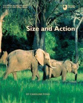 Size and Action