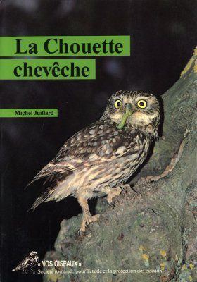 La Chouette Chevêche [The Little Owl]