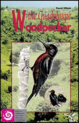 The Guadeloupe Woodpecker