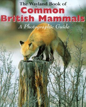 Wayland Book of Common British Mammals: A Photographic Guide