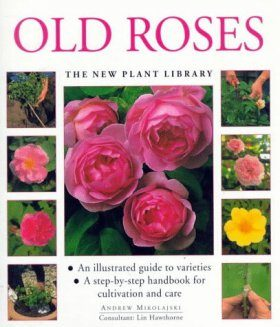 Old Roses