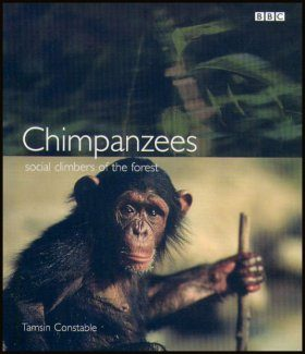 Chimpanzees: Social Climbers of the Forest