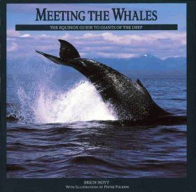 Meeting the Whales