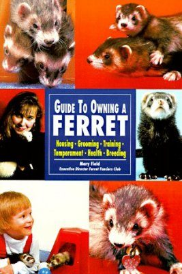 The Guide to Owning a Ferret