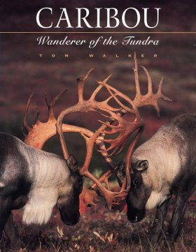 Caribou: Wanderer of the Tundra