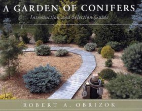 A Garden of Conifers