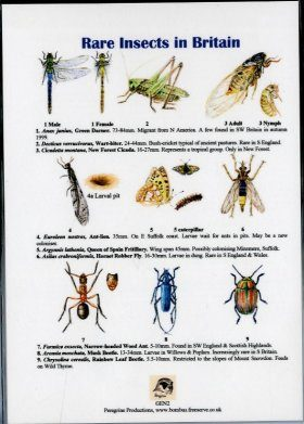 Rare Insects in Britain