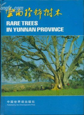 Rare Trees in Yunnan Province