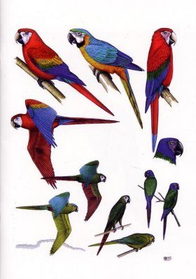 Birds of Tambopata