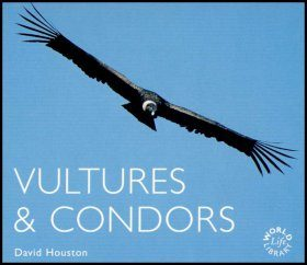 Vultures and Condors