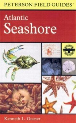Peterson Field Guide to the Atlantic Seashore