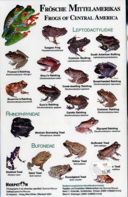 Frogs of Central America / Frosche Mittelamerikas