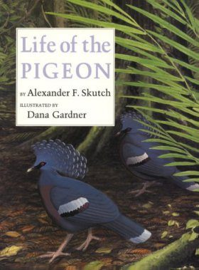 The Life of the Pigeon