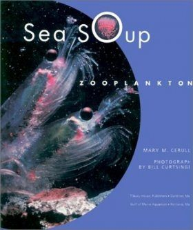 Sea Soup: Zooplankton