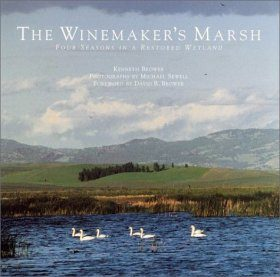 The Winemaker's Marsh