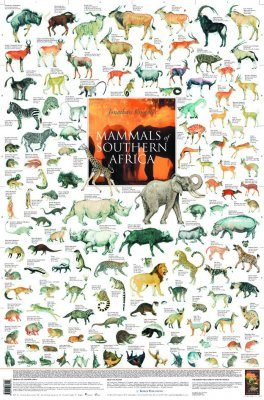 Mammals of Southern Africa - Poster