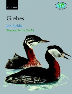 Grebes: Podicipedidae