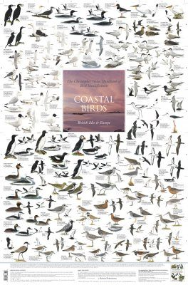 Coastal Birds: British Isles and Europe - Poster