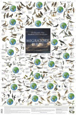 Migratory Birds: Europe's South-Bound Long-Distance Travellers - Poster