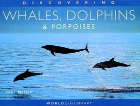 Discovering Whales, Dolphins and Porpoises