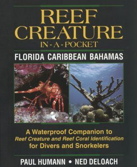 Reef Creature In-A-Pocket: Florida, Caribbean, Bahamas