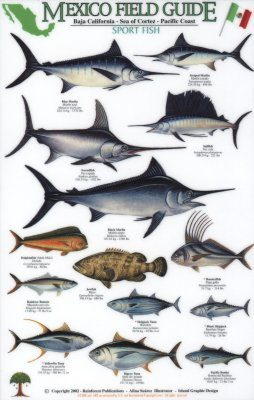 Mexico Field Guides: Baja California - Sea of Cortez - Pacific Coast: Sport Fish [English / Spanish]