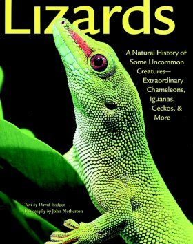 Lizards: A Natural History of Some Uncommon Creatures - Extraordinary Chameleons, Iguanas, Geckos and More