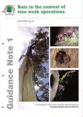Bats in the Context of Tree Work Operations