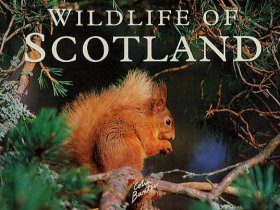 Wildlife of Scotland