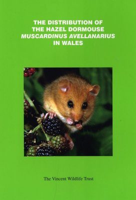 The Distribution of the Hazel Dormouse Muscardinus avellanarius in Wales