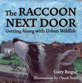 The Raccoon Next Door