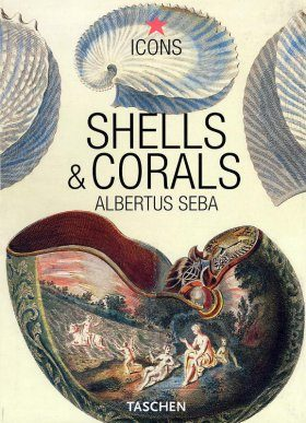 Shells and Corals