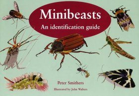 Minibeasts: An Identification Guide