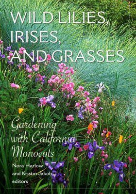 Wild Lilies, Irises and Grasses