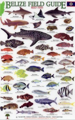 Belize Field Guides: Reef Fish