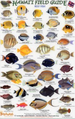Hawaii Field Guides: Reef Fish 1 (Small Fish) [English / Hawaiian]