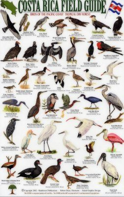 Costa Rica Field Guide: Birds of the Pacific Coast and the Tropical Dry Forest [English / Spanish]