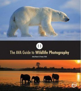 The Essential Guide to Wildlife Photography