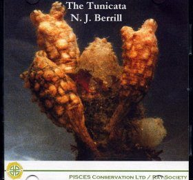 The Tunicata
