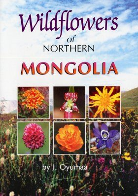 Wildflowers of Northern Mongolia