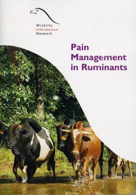 Pain Management in Ruminants