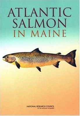 Atlantic Salmon in Maine