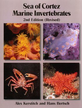 Sea of Cortez Marine Invertebrates