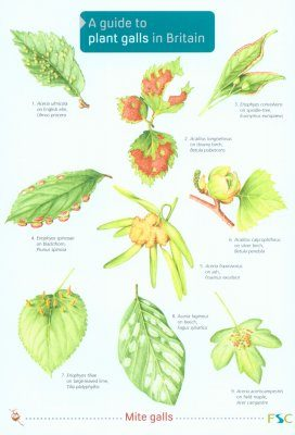A Guide to Plant Galls in Britain