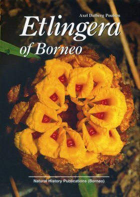 Etlingera of Borneo