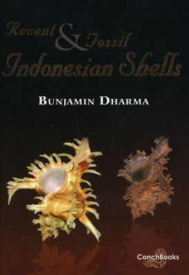 Recent & Fossil Indonesian Shells