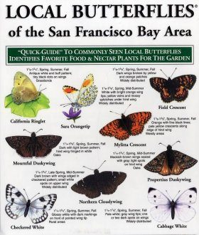 Quick Guide to Local Butterflies of the San Francisco Bay Area